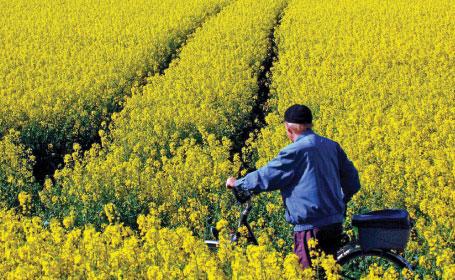 biocombustibili_UE