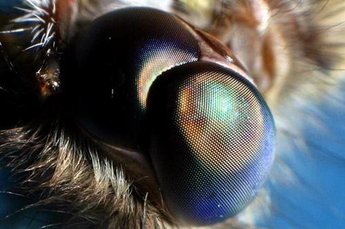 Ochii moliei inspiră dezvoltatorii celulelor solare