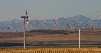 turbinele eoliene si fauna salbatica