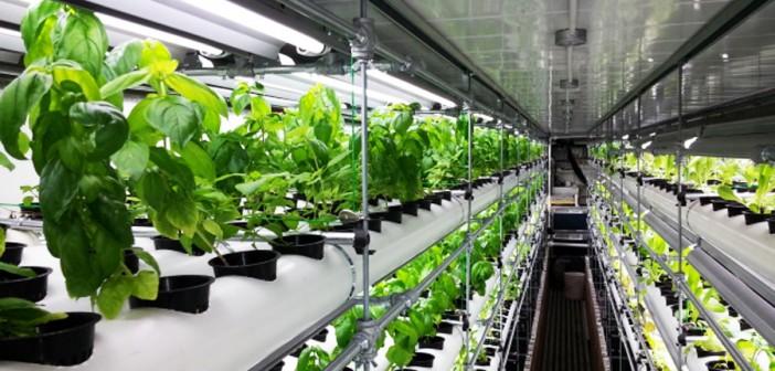cresterea plantelor cu ajutorul deseurilor