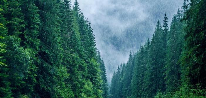 padure din muntii carpati