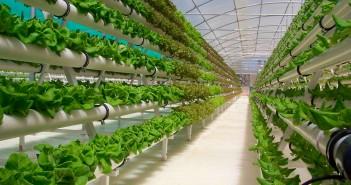 energie regenerabila in productia alimentara